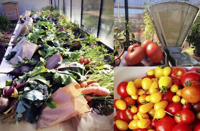 ØsterGRO Klimakvarter ugens høst
